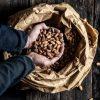 prawdziwe kakao   ziarna Criollo